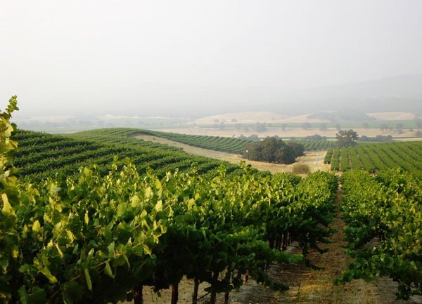 District 7 Hames Vineyard, Monterey County, Ca